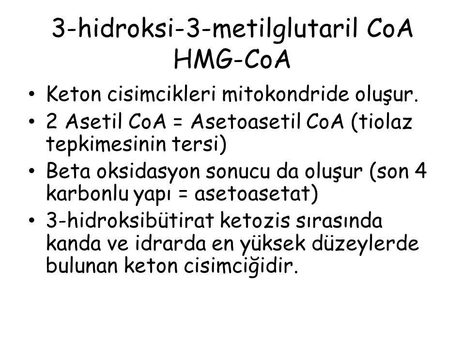 3-hidroksi-3-metilglutaril CoA HMG-CoA