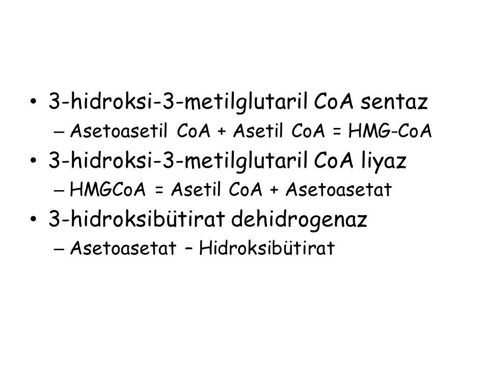3-hidroksi-3-metilglutaril CoA sentaz