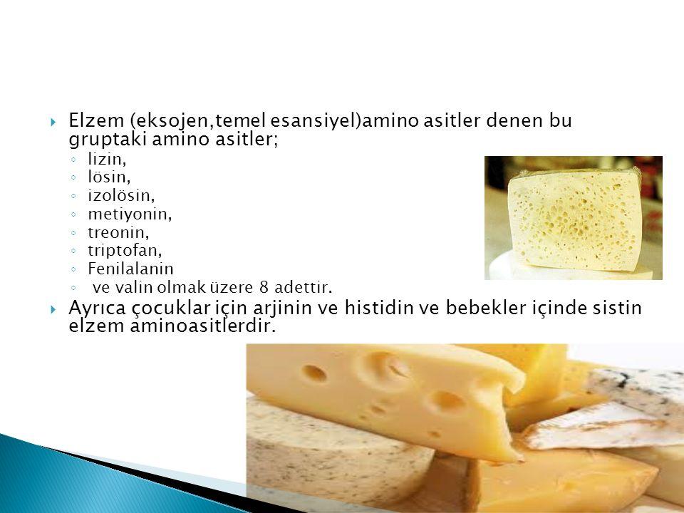 Elzem (eksojen,temel esansiyel)amino asitler denen bu gruptaki amino asitler;