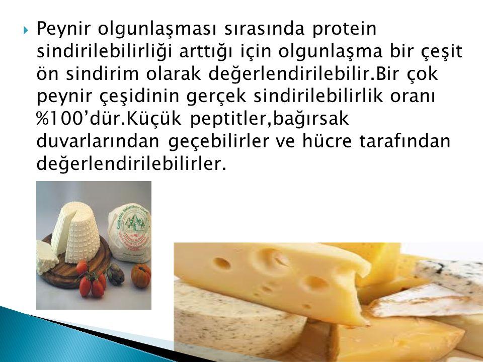 Peynir olgunlaşması sırasında protein sindirilebilirliği arttığı için olgunlaşma bir çeşit ön sindirim olarak değerlendirilebilir.Bir çok peynir çeşidinin gerçek sindirilebilirlik oranı %100'dür.Küçük peptitler,bağırsak duvarlarından geçebilirler ve hücre tarafından değerlendirilebilirler.