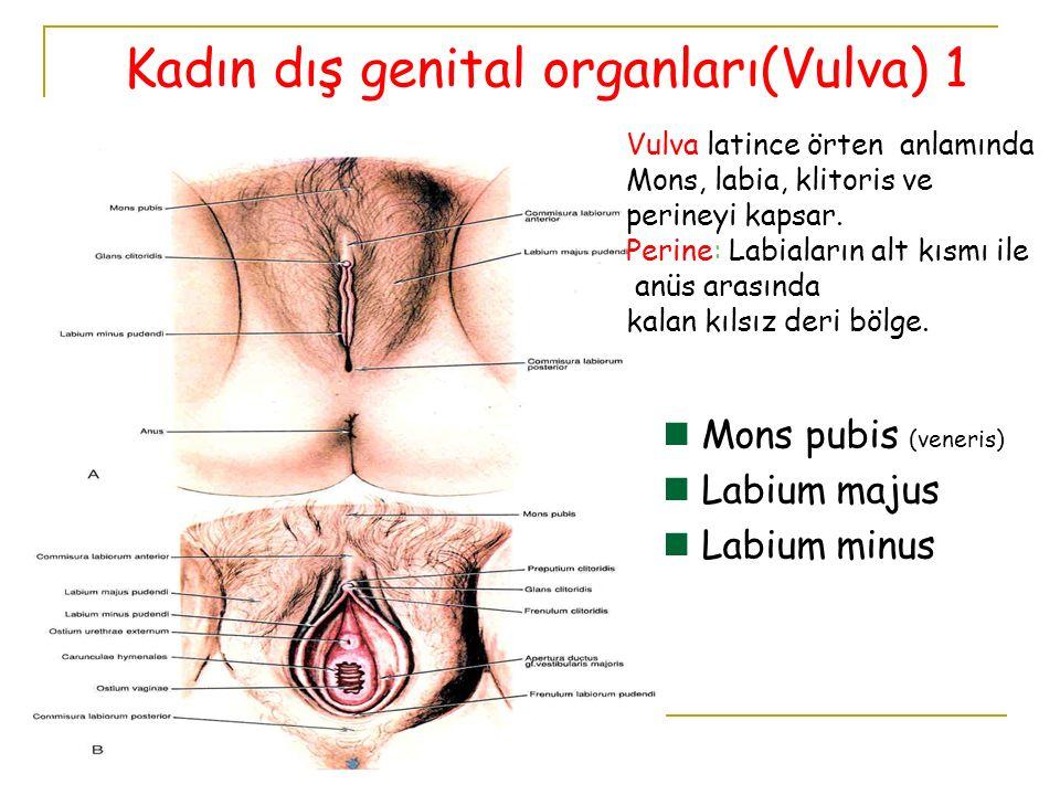 Kadın dış genital organları(Vulva) 1