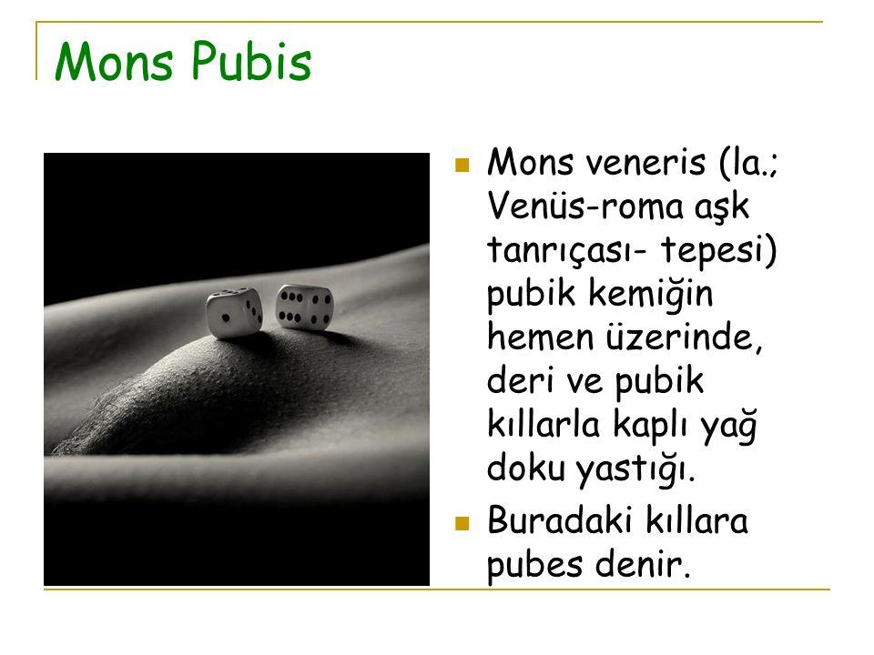 Mons Pubis Mons veneris (la.; Venüs-roma aşk tanrıçası- tepesi) pubik kemiğin hemen üzerinde, deri ve pubik kıllarla kaplı yağ doku yastığı.