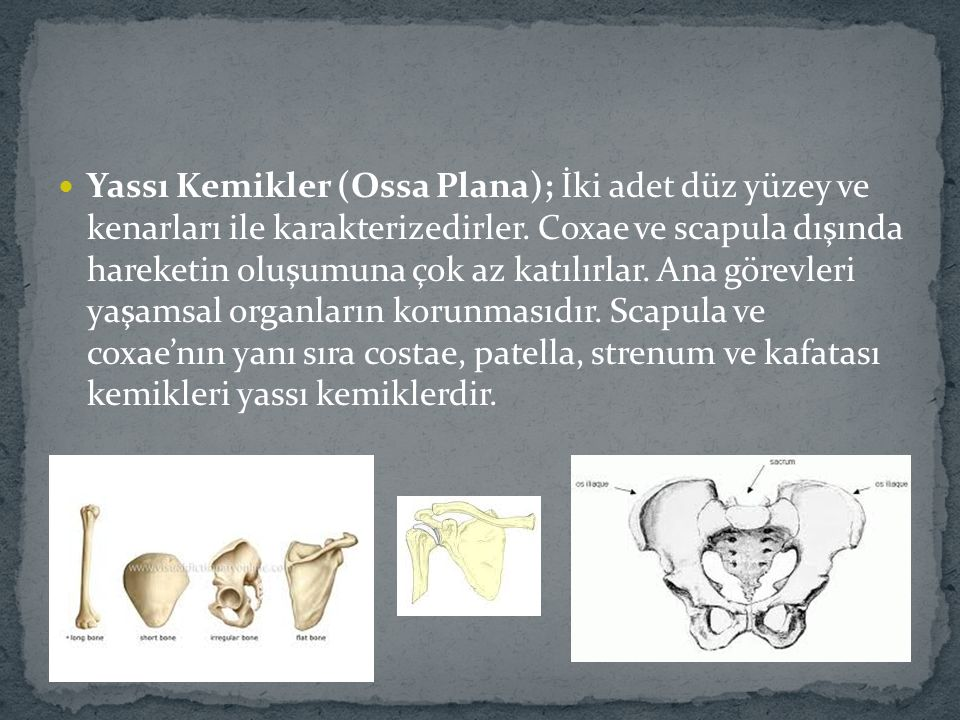 Yassı Kemikler (Ossa Plana); İki adet düz yüzey ve kenarları ile karakterizedirler.