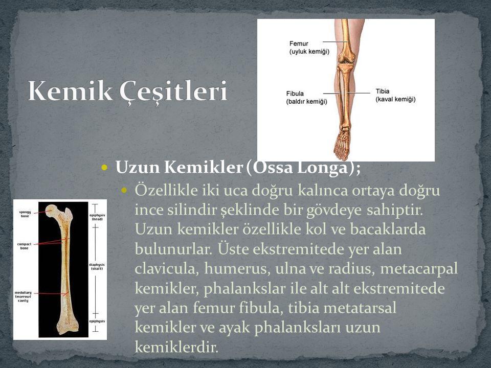 Kemik Çeşitleri Uzun Kemikler (Ossa Longa);