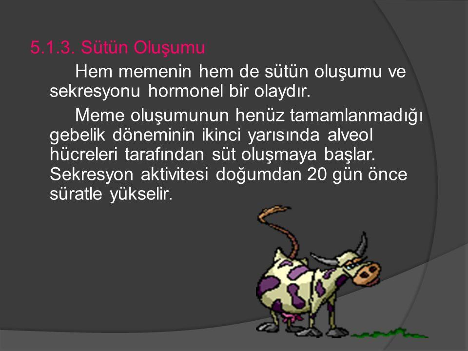 5.1.3. Sütün Oluşumu Hem memenin hem de sütün oluşumu ve sekresyonu hormonel bir olaydır.