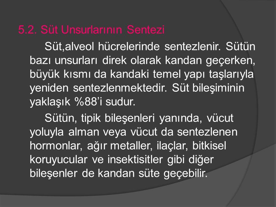 5. 2. Süt Unsurlarının Sentezi Süt,alveol hücrelerinde sentezlenir