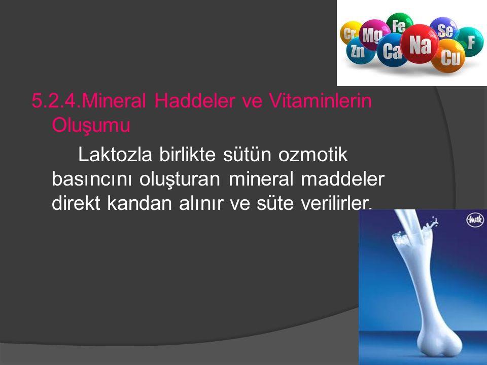 5.2.4.Mineral Haddeler ve Vitaminlerin Oluşumu Laktozla birlikte sütün ozmotik basıncını oluşturan mineral maddeler direkt kandan alınır ve süte verilirler.