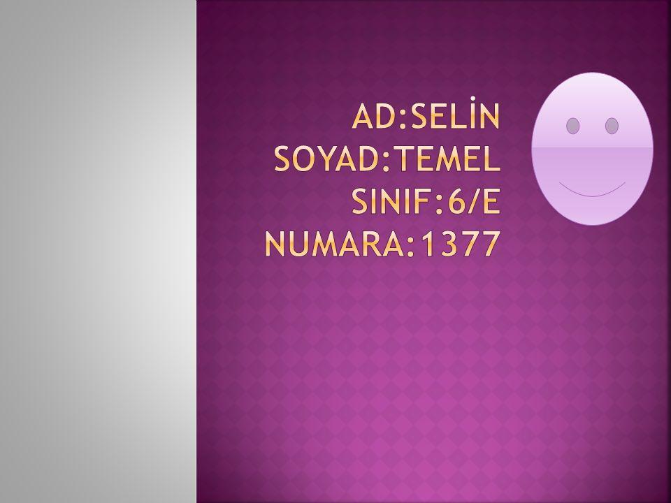 AD:SELİN SOYAD:TEMEL SINIF:6/E NUMARA:1377