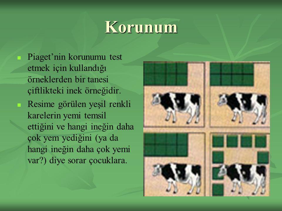 Korunum Piaget'nin korunumu test etmek için kullandığı örneklerden bir tanesi çiftlikteki inek örneğidir.