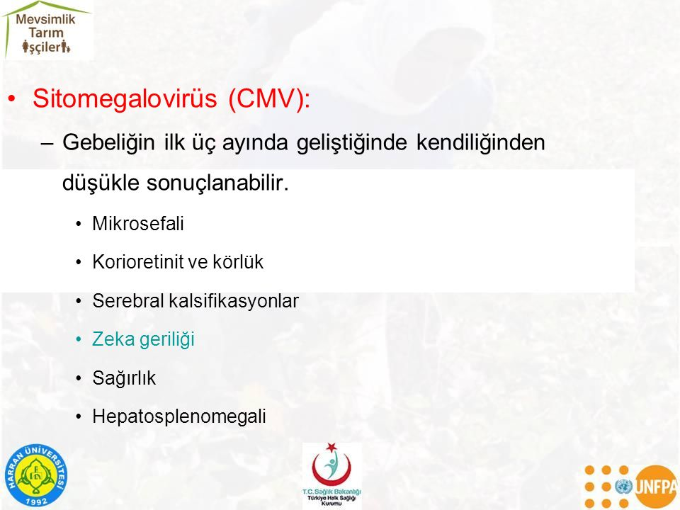 Sitomegalovirüs (CMV):