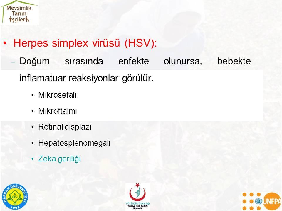 Herpes simplex virüsü (HSV):