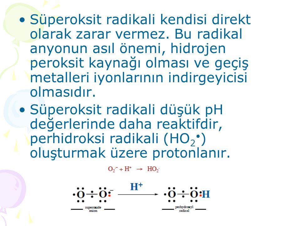 Süperoksit radikali kendisi direkt olarak zarar vermez