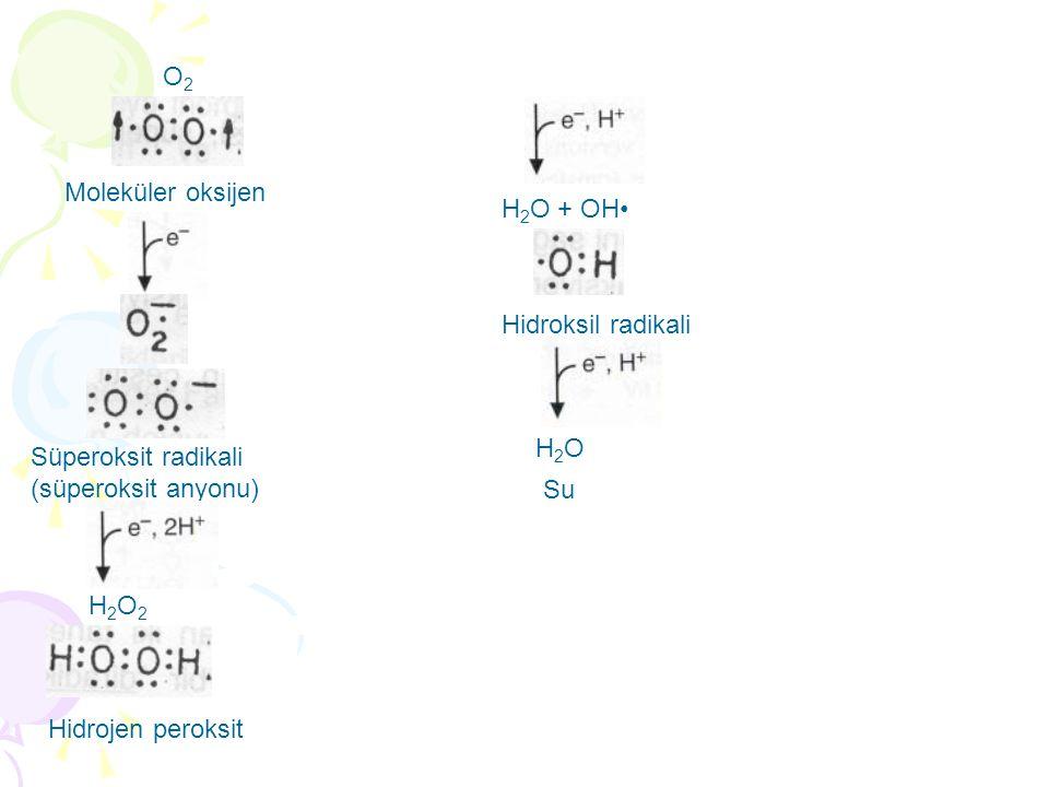 O2 Moleküler oksijen. H2O + OH• Hidroksil radikali. H2O. Süperoksit radikali. (süperoksit anyonu)