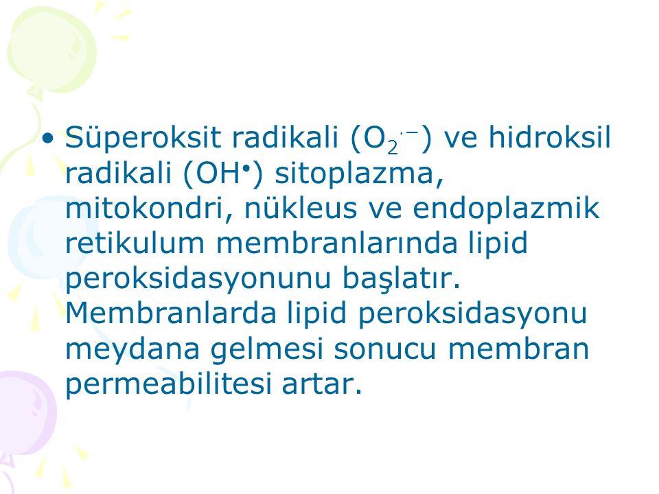 Süperoksit radikali (O2⋅−) ve hidroksil radikali (OH•) sitoplazma, mitokondri, nükleus ve endoplazmik retikulum membranlarında lipid peroksidasyonunu başlatır.