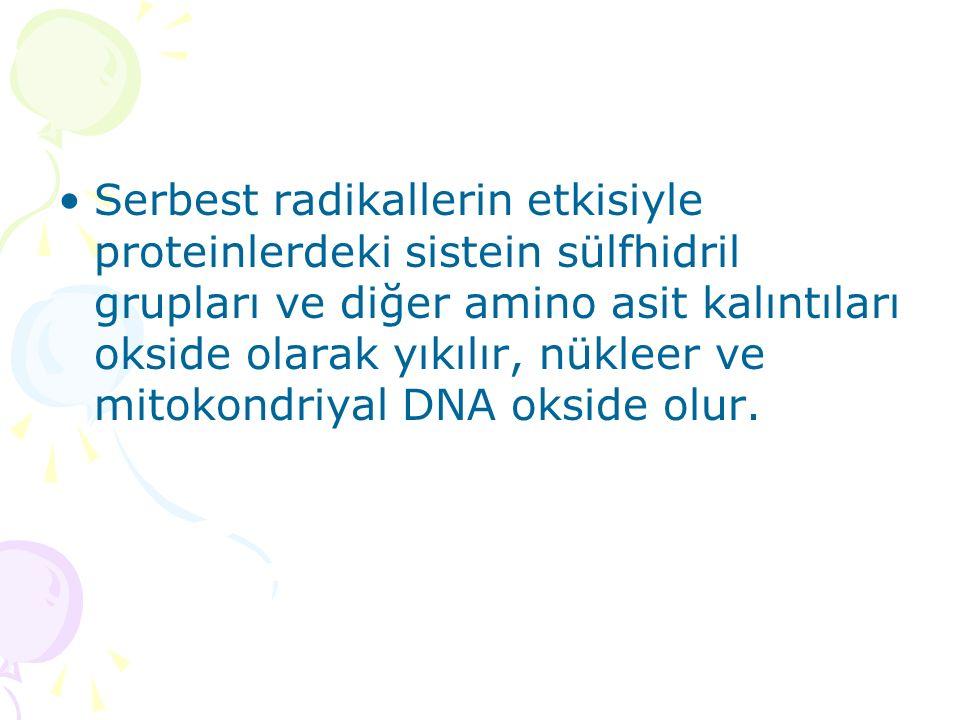 Serbest radikallerin etkisiyle proteinlerdeki sistein sülfhidril grupları ve diğer amino asit kalıntıları okside olarak yıkılır, nükleer ve mitokondriyal DNA okside olur.