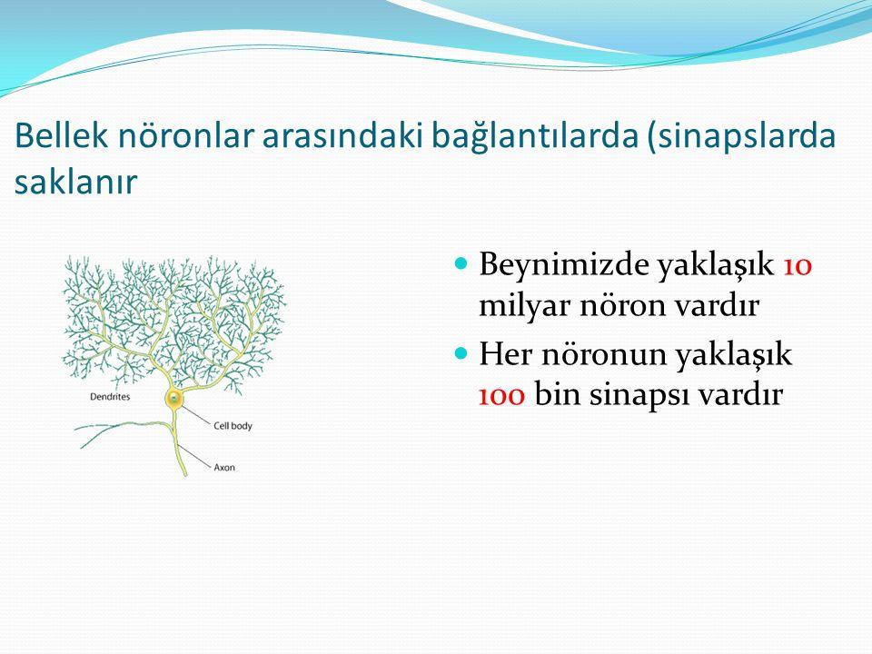 Bellek nöronlar arasındaki bağlantılarda (sinapslarda saklanır
