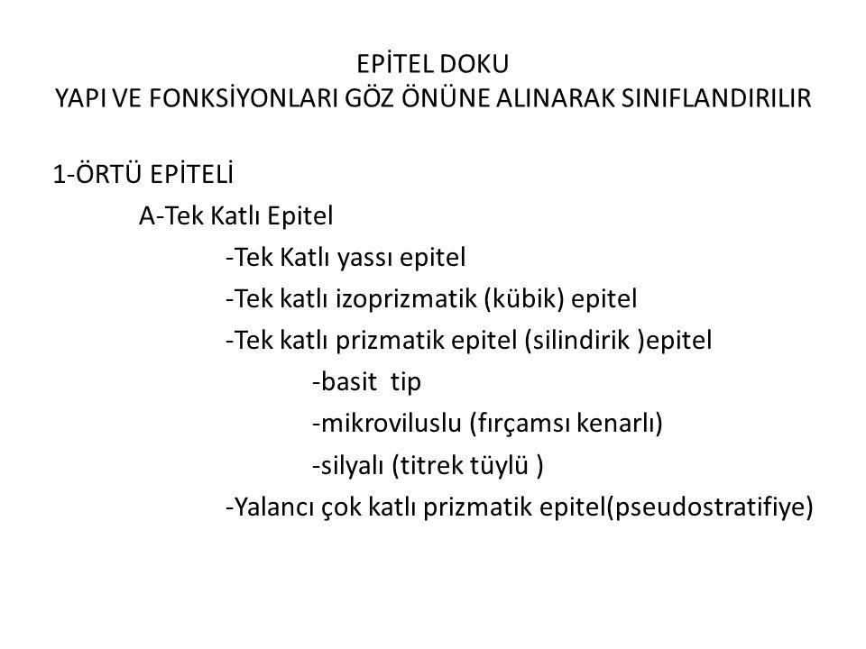 EPİTEL DOKU YAPI VE FONKSİYONLARI GÖZ ÖNÜNE ALINARAK SINIFLANDIRILIR
