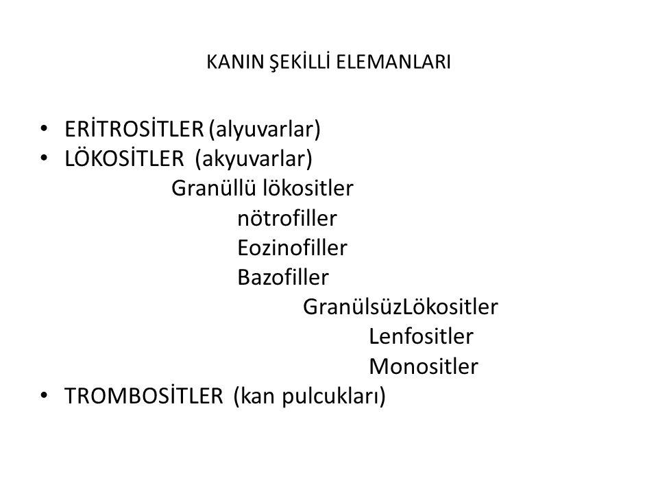 KANIN ŞEKİLLİ ELEMANLARI