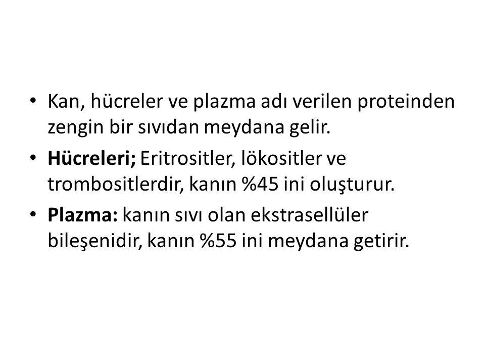 Kan, hücreler ve plazma adı verilen proteinden zengin bir sıvıdan meydana gelir.