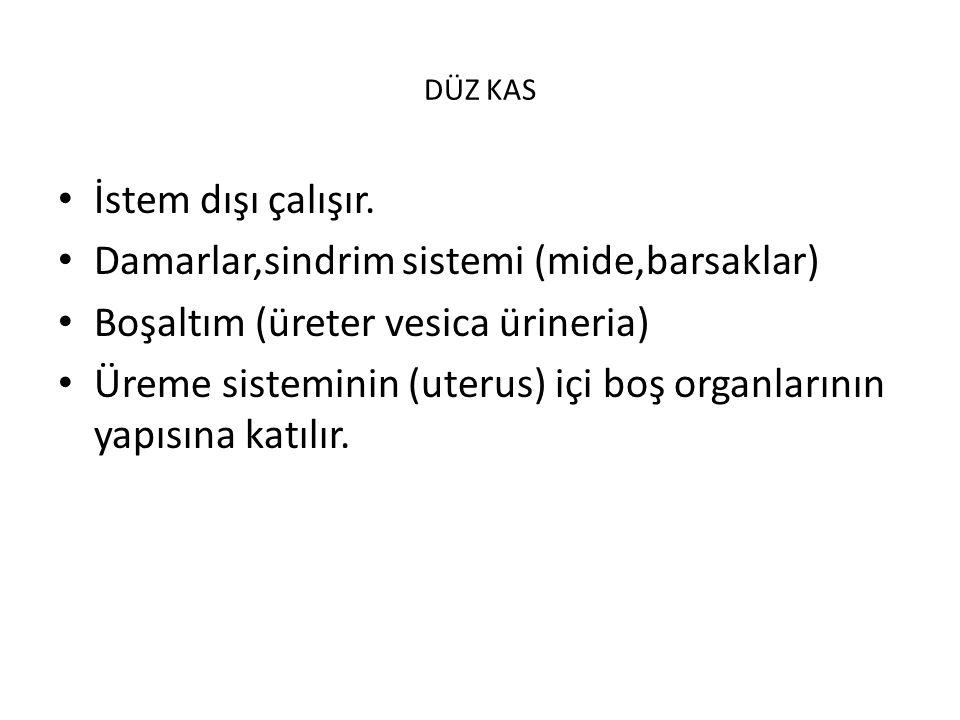 Damarlar,sindrim sistemi (mide,barsaklar)