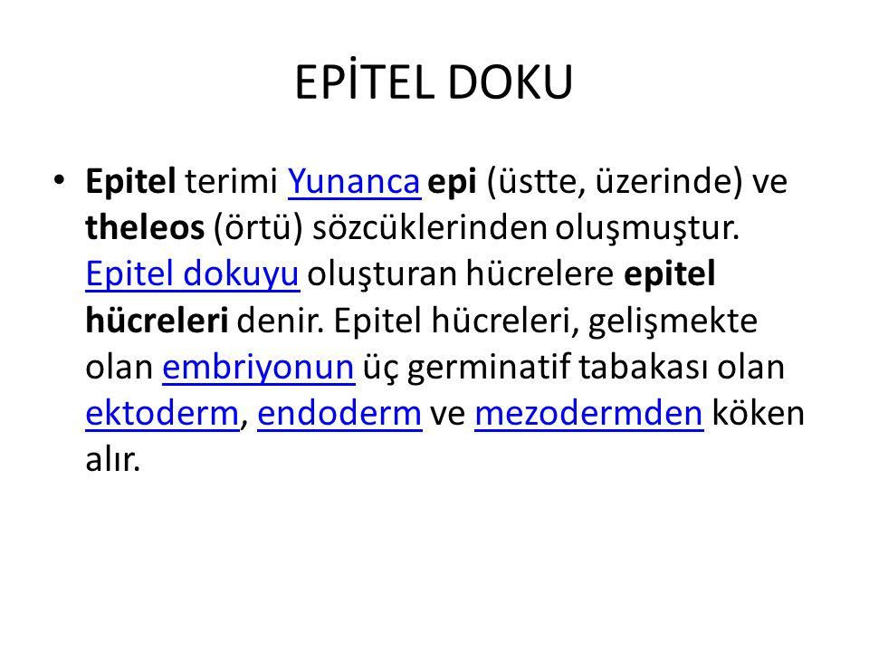 EPİTEL DOKU