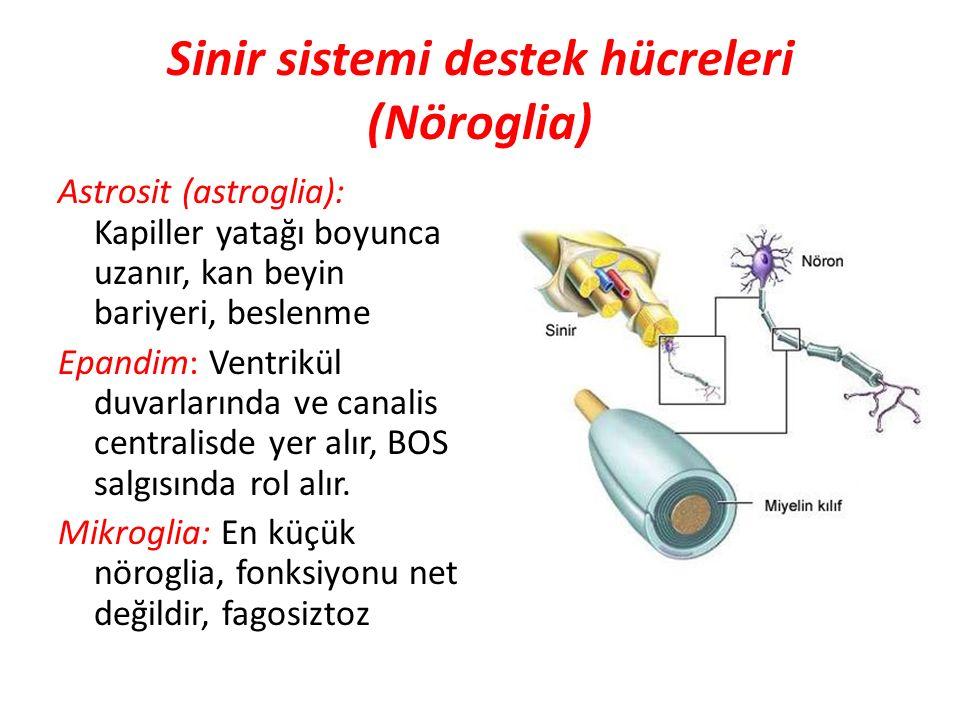 Sinir sistemi destek hücreleri (Nöroglia)