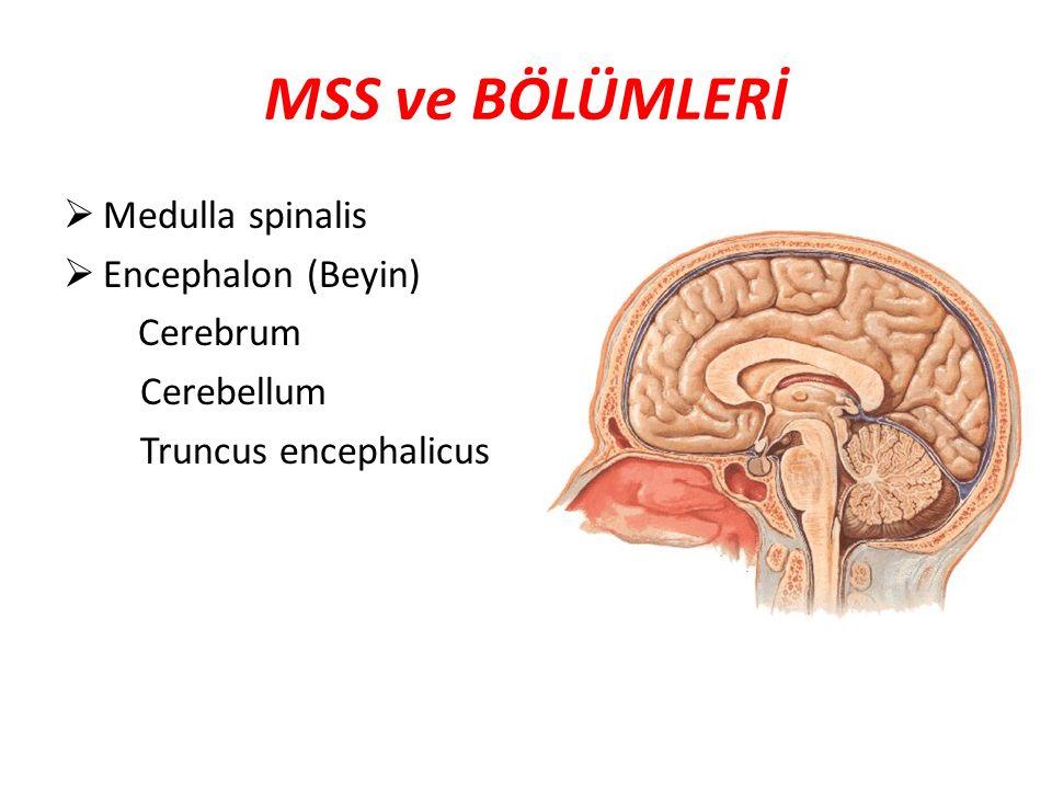 MSS ve BÖLÜMLERİ Medulla spinalis Encephalon (Beyin) Cerebrum