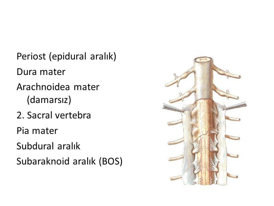 Periost (epidural aralık) Dura mater Arachnoidea mater (damarsız) 2