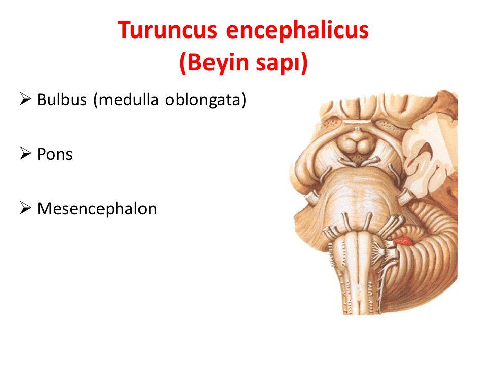 Turuncus encephalicus (Beyin sapı)