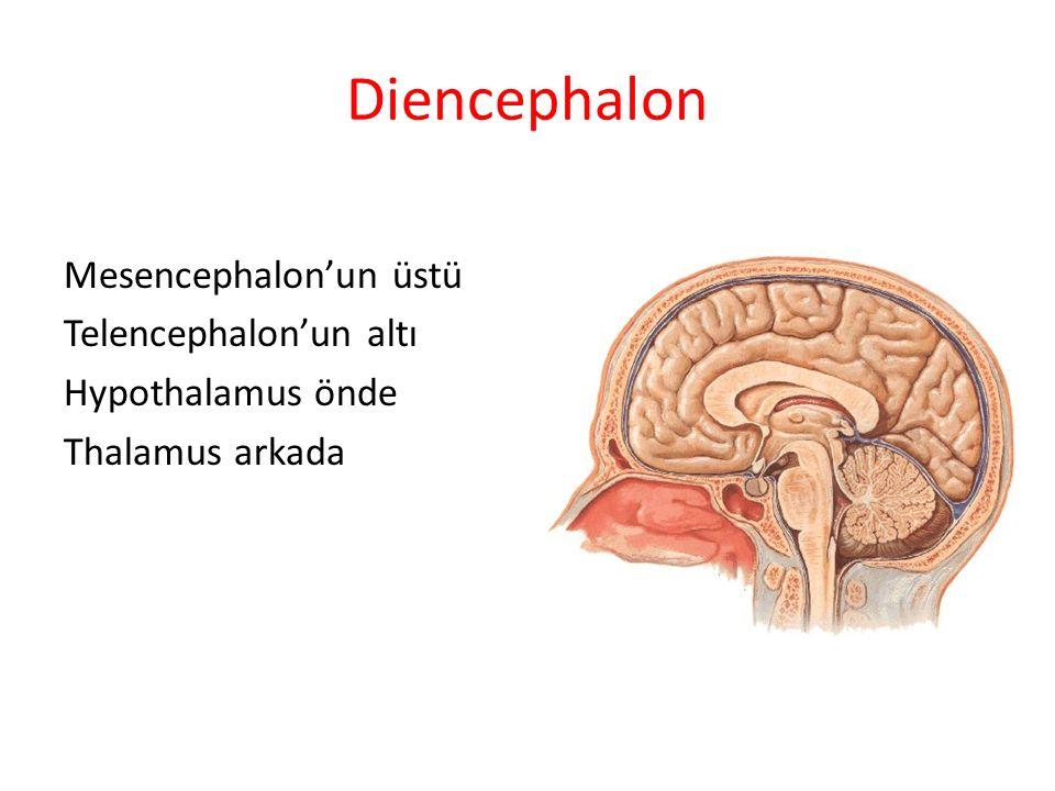Diencephalon Mesencephalon'un üstü Telencephalon'un altı Hypothalamus önde Thalamus arkada