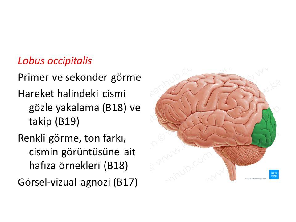 Lobus occipitalis Primer ve sekonder görme Hareket halindeki cismi gözle yakalama (B18) ve takip (B19) Renkli görme, ton farkı, cismin görüntüsüne ait hafıza örnekleri (B18) Görsel-vizual agnozi (B17)