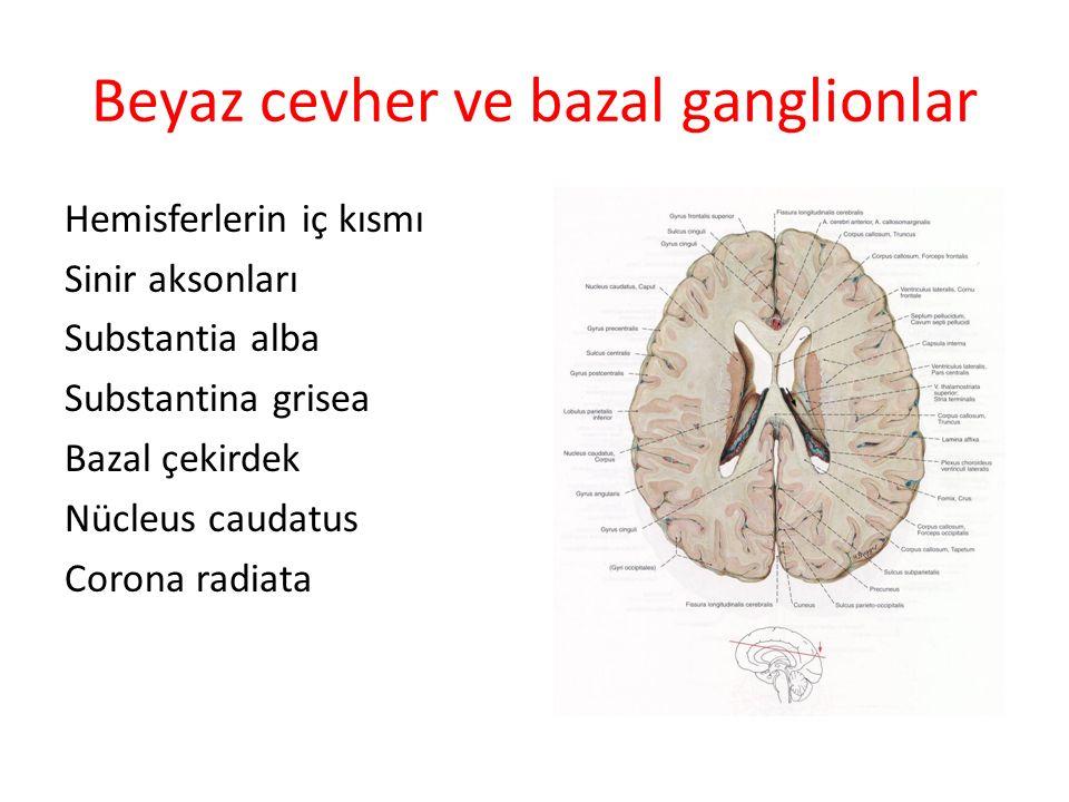 Beyaz cevher ve bazal ganglionlar