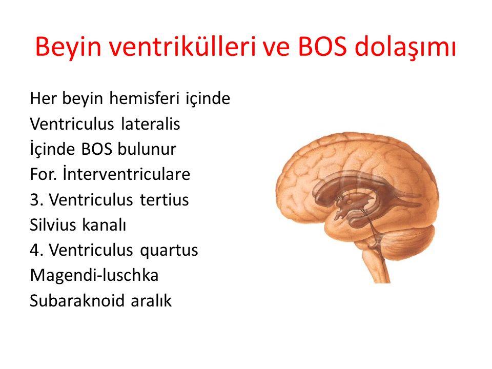 Beyin ventrikülleri ve BOS dolaşımı