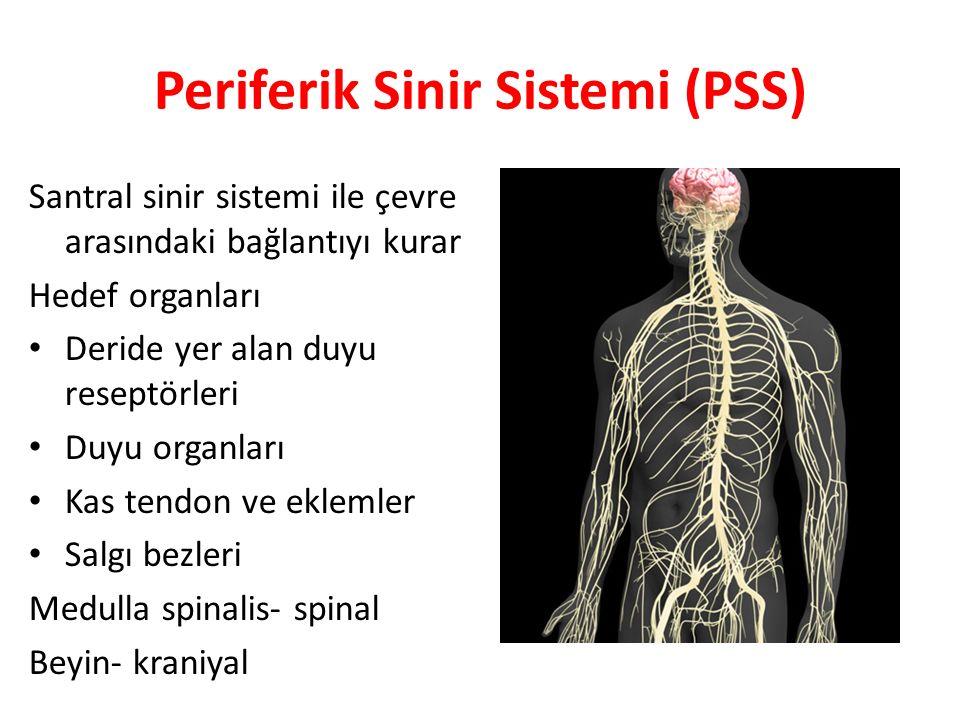 Periferik Sinir Sistemi (PSS)