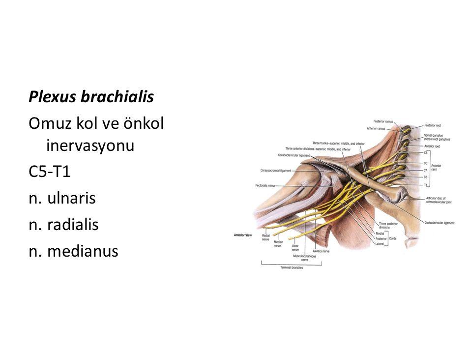 Plexus brachialis Omuz kol ve önkol inervasyonu C5-T1 n. ulnaris n