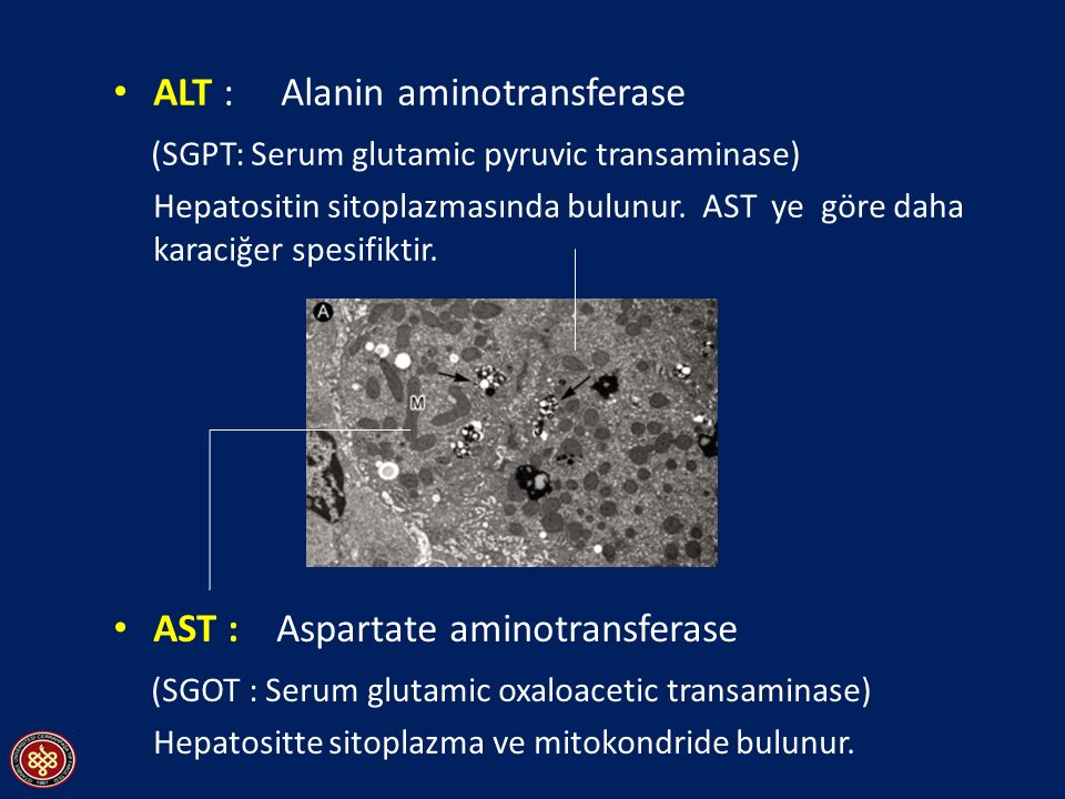 ALT : Alanin aminotransferase