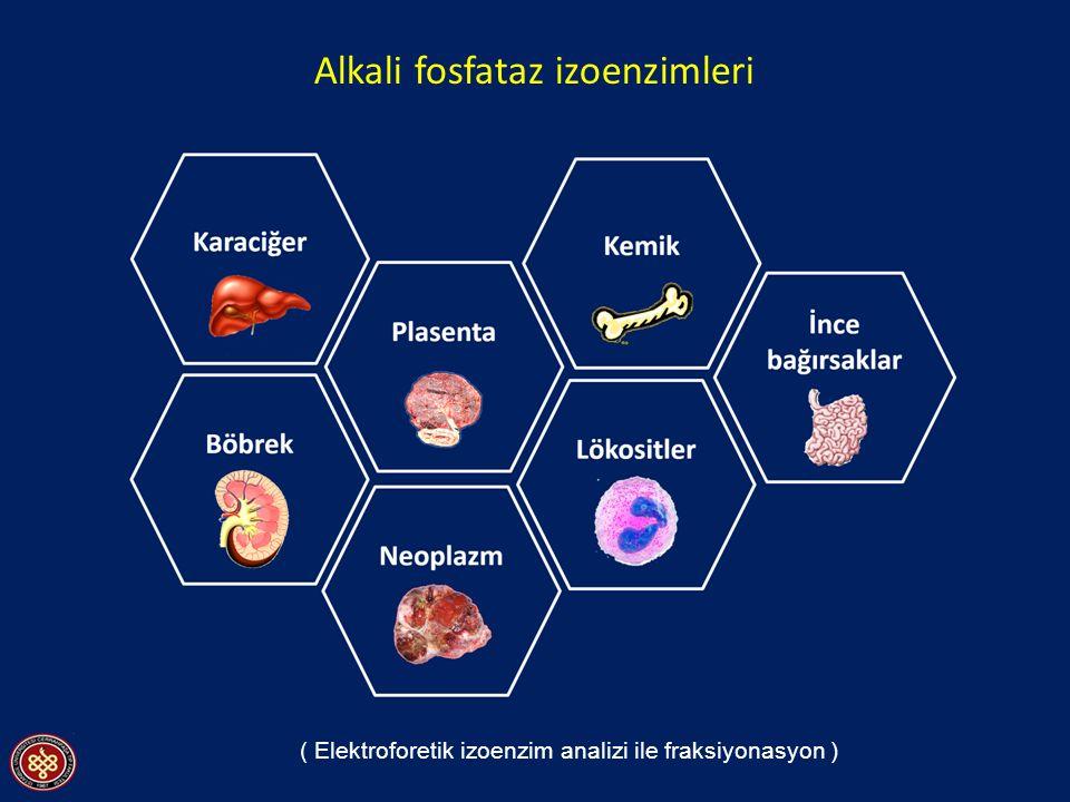 Alkali fosfataz izoenzimleri