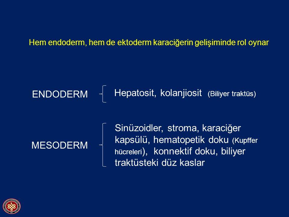 Hepatosit, kolanjiosit (Biliyer traktüs)