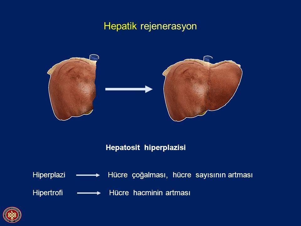 Hepatik rejenerasyon Hepatosit hiperplazisi