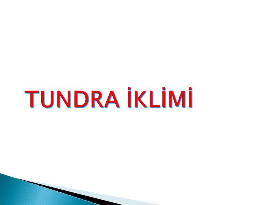 TUNDRA İKLİMİ