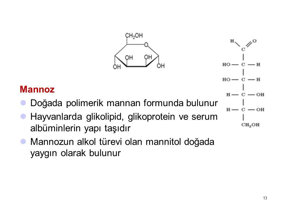 Mannoz Doğada polimerik mannan formunda bulunur. Hayvanlarda glikolipid, glikoprotein ve serum albüminlerin yapı taşıdır.