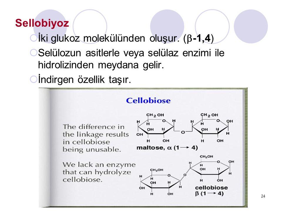 Sellobiyoz İki glukoz molekülünden oluşur. (-1,4)