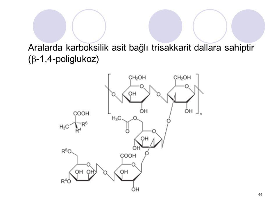 Aralarda karboksilik asit bağlı trisakkarit dallara sahiptir (b-1,4-poliglukoz)