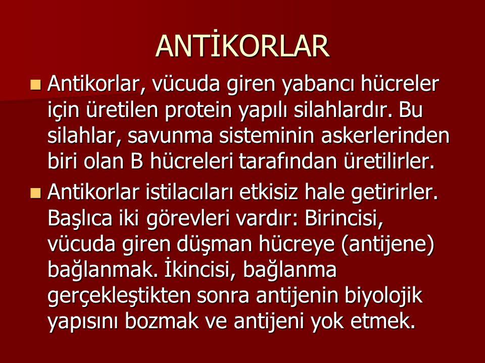 ANTİKORLAR
