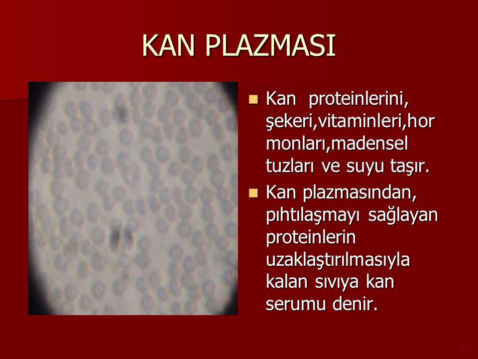 KAN PLAZMASI Kan proteinlerini, şekeri,vitaminleri,hormonları,madensel tuzları ve suyu taşır.