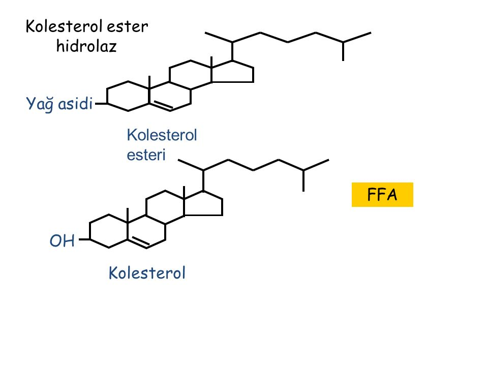 Kolesterol ester hidrolaz