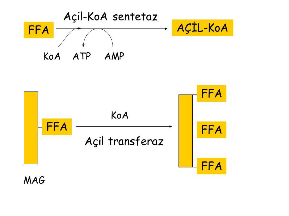 Açil-KoA sentetaz AÇİL-KoA FFA FFA FFA FFA Açil transferaz FFA KoA ATP