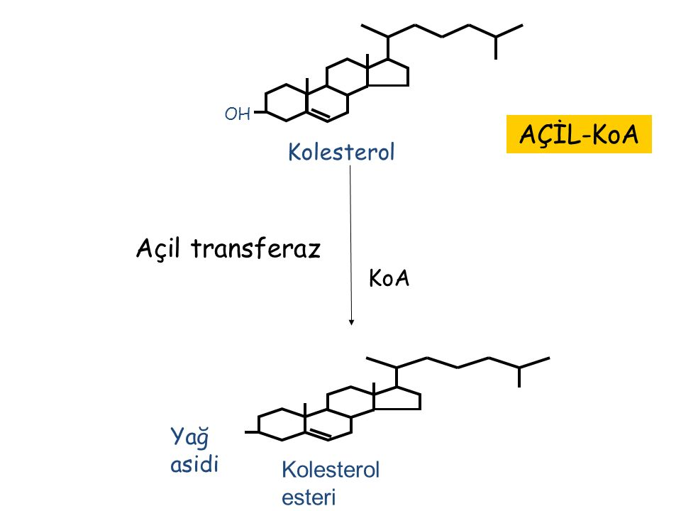 OH Kolesterol AÇİL-KoA Açil transferaz KoA Yağ asidi Kolesterol esteri