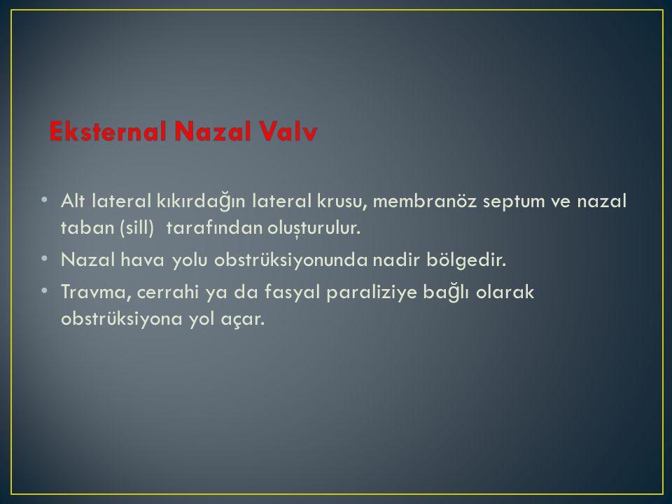 Eksternal Nazal Valv Alt lateral kıkırdağın lateral krusu, membranöz septum ve nazal taban (sill) tarafından oluşturulur.