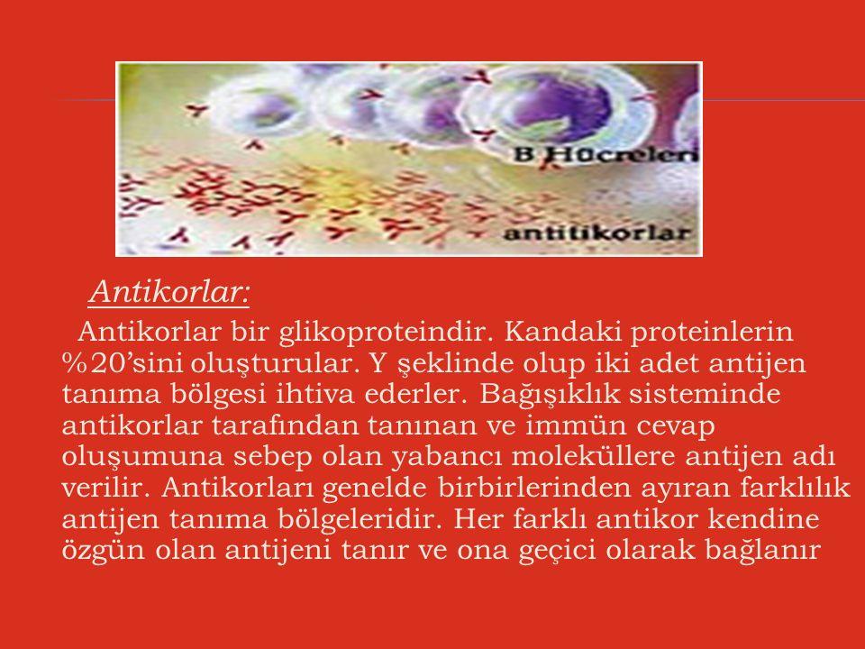 Antikorlar: Antikorlar bir glikoproteindir